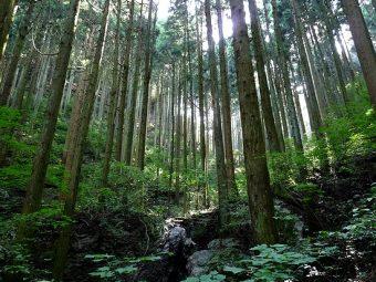 国産木材の利用促進